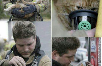 Tuleohutus lemmikloomaga